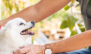 Prostate disease in dogs: symptoms and screening