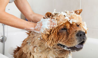 How to Choose the Right Shampoo for Your Dog